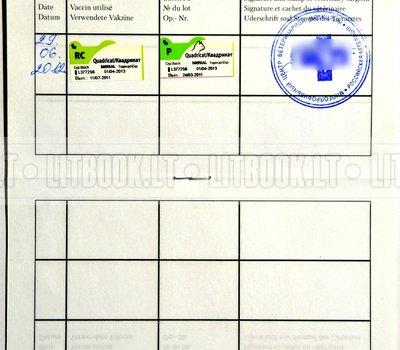 Заполненный Международный паспорт животного