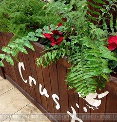 Живые цветы в ТЦ Ozas (Озас)