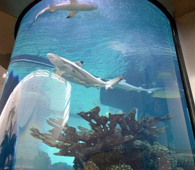 Тропические рыбы в аквариуме в ТЦ Мега Каунас