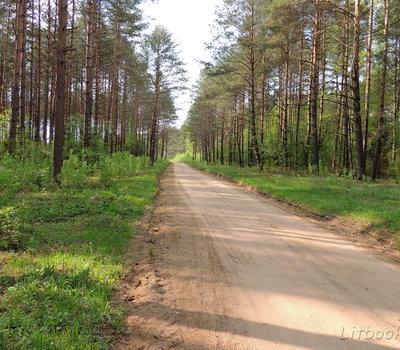 Дорога к парку ровная, песчаная