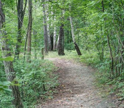 Познавательная тропа Dūkštos Pažintinis Pėsčiųjų Takas, Региональный парк Нерис