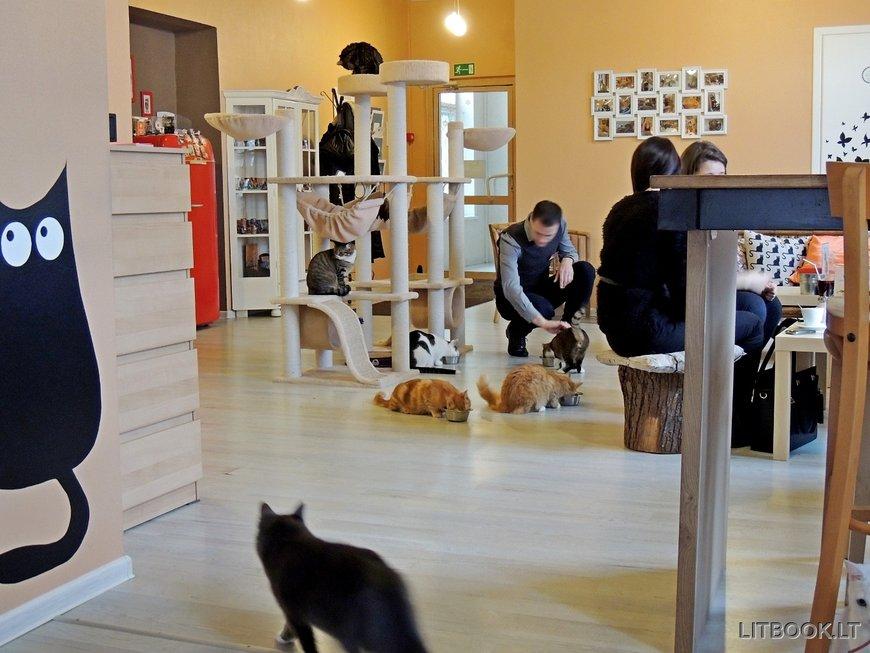Cat Cafe в Вильнюсе