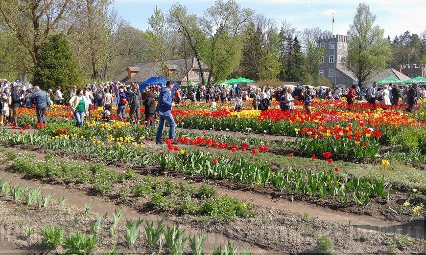 Tulpju svētki Lietuvā Burbišķu muižas dārzi