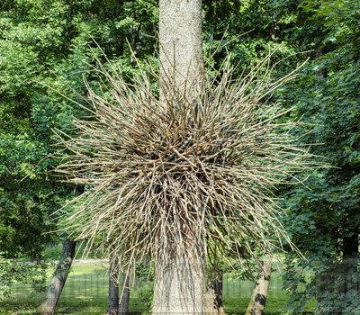 необычное дерево в ботаническом саду