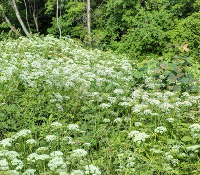 В Литве очень богатая флора и фауна