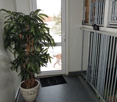 Приют для животных SOS gyvūnai Вильнюс, клетки для животных