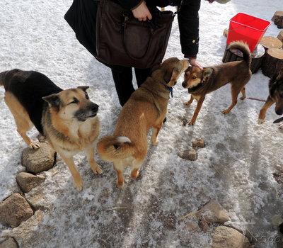 Приют для животных SOS gyvūnai Вильнюс